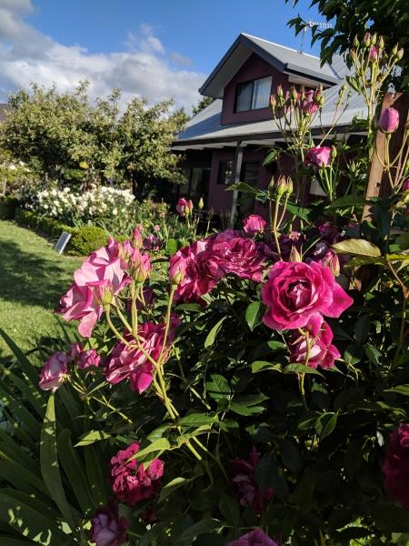 magenta cottage (5)